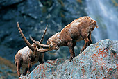 MAM 17 WF0001 01