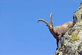 MAM 17 WF0002 01