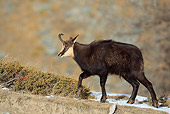 MAM 17 WF0004 01