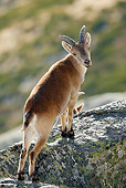 MAM 17 WF0006 01