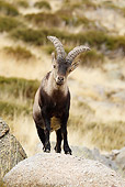 MAM 17 WF0007 01