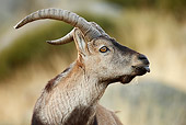 MAM 17 WF0008 01