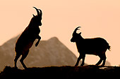 MAM 17 WF0010 01