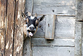 MAM 17 WF0013 01