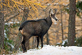 MAM 17 WF0014 01