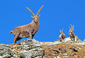 MAM 17 WF0016 01