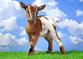 MAM 17 XA0001 01