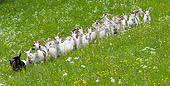 MAM 17 KH0005 01