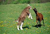 MAM 17 LS0002 01