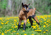 MAM 17 LS0003 01