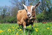 MAM 17 LS0005 01