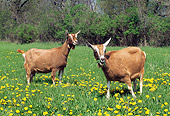 MAM 17 LS0006 01