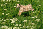 MAM 17 RK0013 02