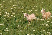 MAM 17 RK0016 01