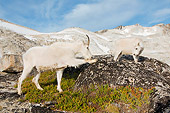MAM 17 SK0002 01
