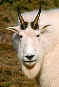MAM 17 TL0001 01