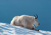 MAM 17 TL0002 01