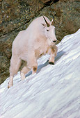 MAM 17 TL0005 01
