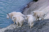 MAM 17 TL0007 01