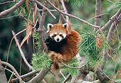 MAM 20 RK0006 06