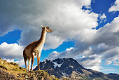 MAM 22 MH0001 01