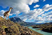 MAM 22 MH0002 01