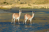 MAM 22 MH0007 01