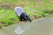 MAM 23 GL0001 01