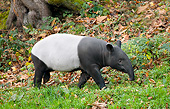 MAM 23 GL0004 01