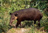 MAM 23 TL0001 01