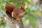 MAM 24 AC0017 01