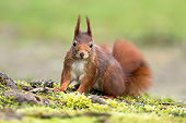MAM 24 AC0018 01