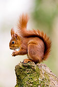 MAM 24 GL0003 01