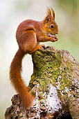 MAM 24 GL0005 01
