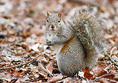 MAM 24 GR0002 01