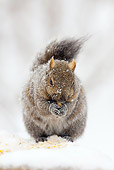 MAM 24 LS0002 01