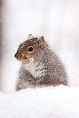 MAM 24 LS0003 01