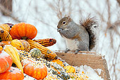 MAM 24 LS0004 01
