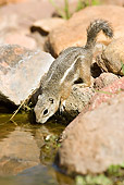 MAM 24 MC0001 01