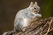MAM 24 MC0003 01