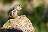 MAM 24 MC0005 01