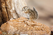 MAM 24 MC0006 01