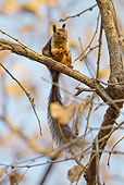 MAM 24 MC0007 01