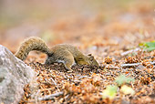 MAM 24 MC0011 01