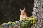 MAM 24 WF0004 01
