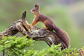 MAM 24 WF0006 01
