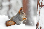 MAM 24 WF0007 01