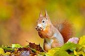 MAM 24 WF0010 01