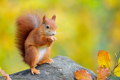 MAM 24 WF0011 01