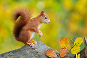 MAM 24 WF0012 01